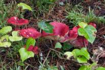 2012-12-11 at 08-57-02 mushrooms 1