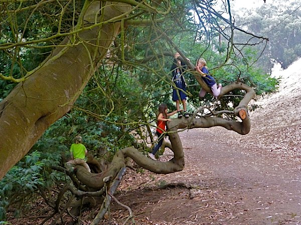 Children in a tree, Glen Canyon