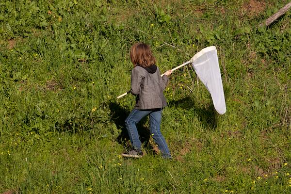 A kid hunts bugs on the hillside