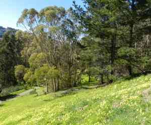 McLaren Park's Flowered Grassland and Forest