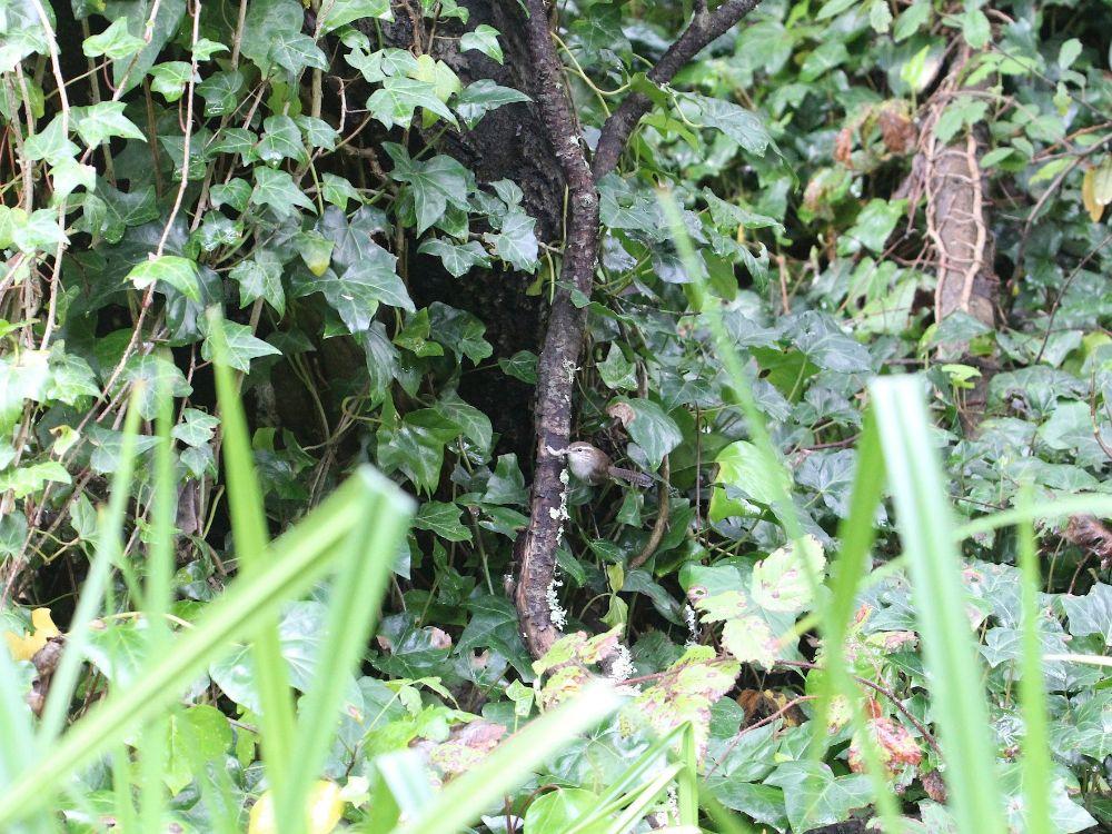 El Birder del patio trasero: ¡Pare el recorte del árbol hasta que termine la estación de la jerarquización!