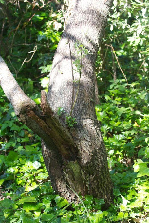 2013-05-19 no nesting spot for wren