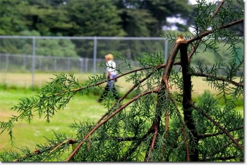 vandalized tree in Golden Gate Park - photo Richmondsfblog