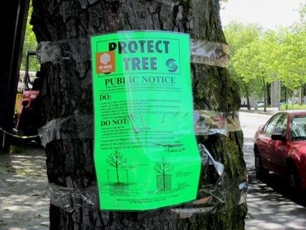 $15,200 tree in Seattle