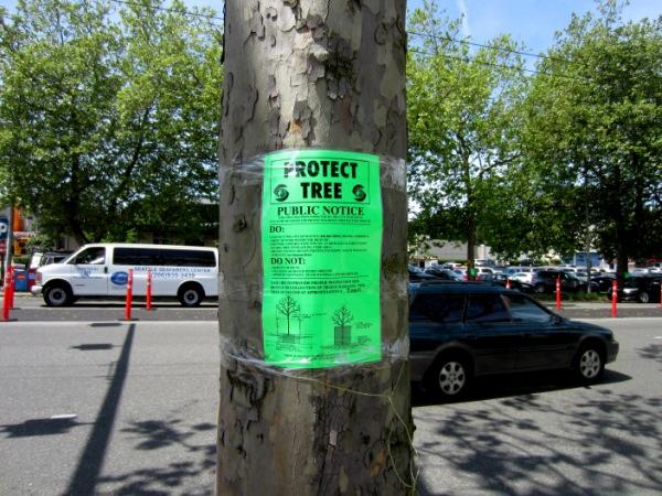 $9000 tree in Seattle