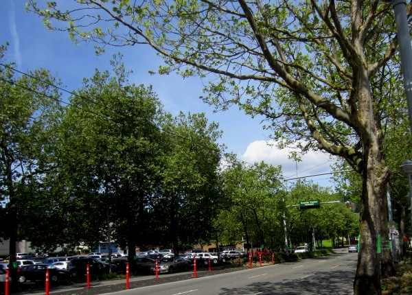 red stanchions and notices on trees in Seattle