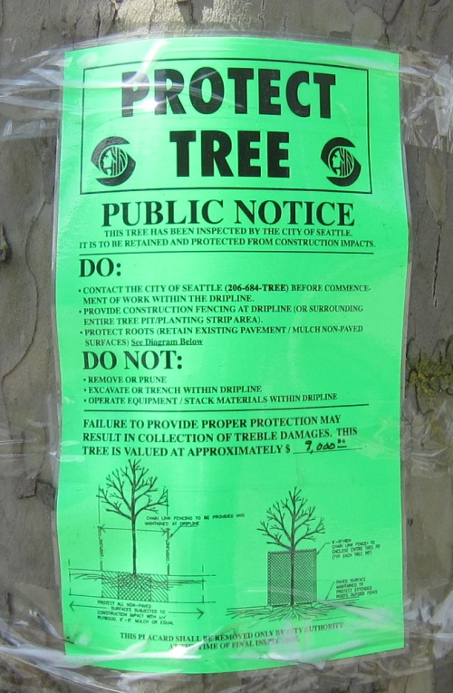 Tree valued at approximately $9,000