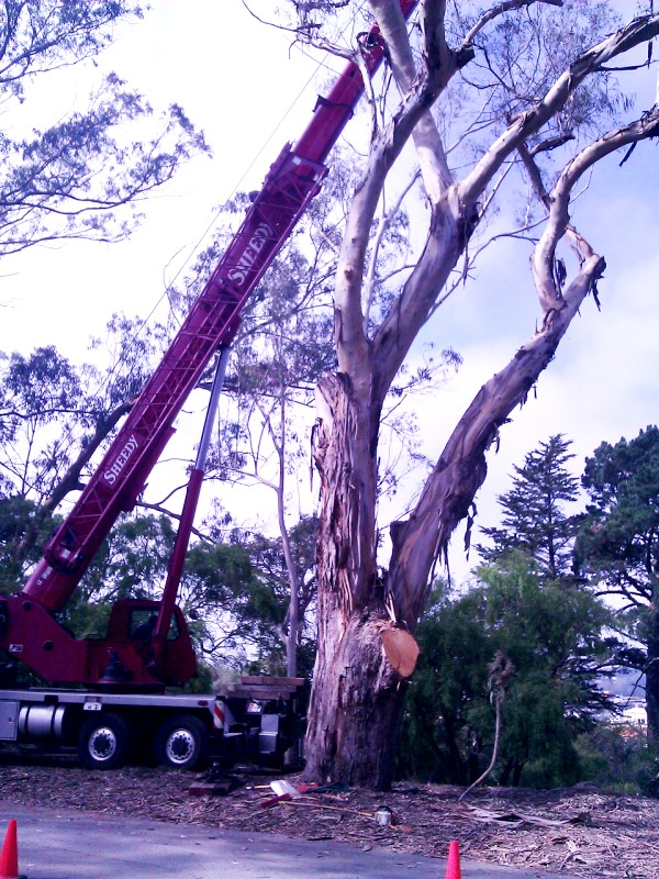 Butchering this tree