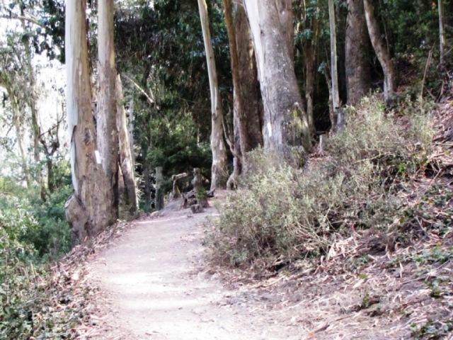Glenridge trail, heading south