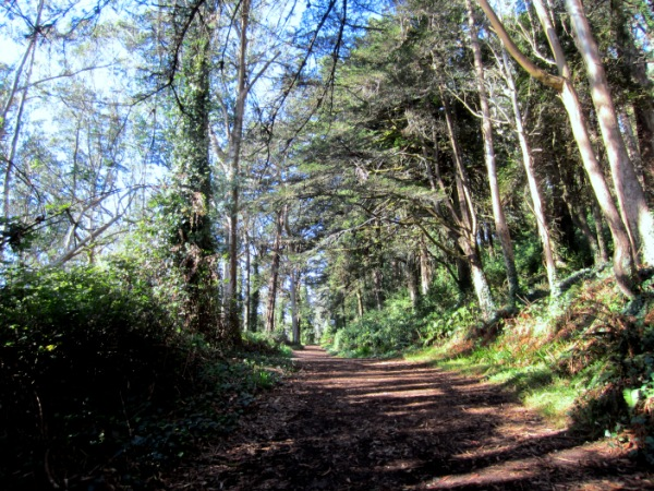 entry to Mt Davidson Forest