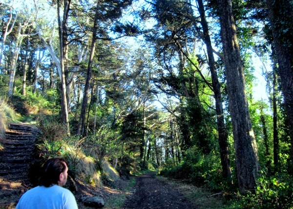 mt davidson forest - hiker on trail