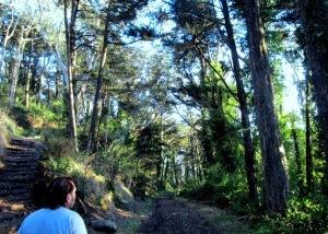 mt davidson forest - hiker on trail