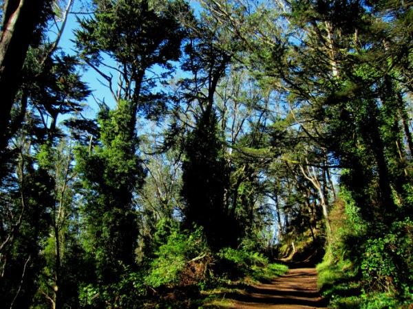 Mt Davidson woodland path