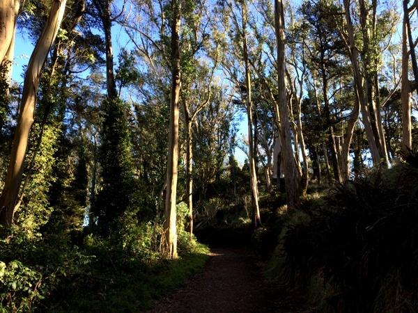 path below the cross on Mt Davidson