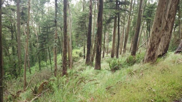 4428599_orig 27 below the trail