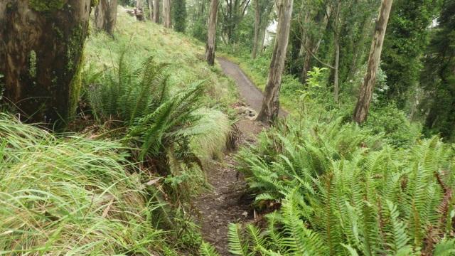 5819148_orig 19 ferns and a damp trail