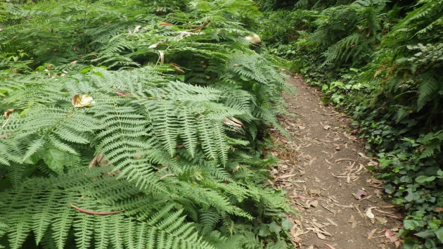 6534432_orig 34 love the ferns