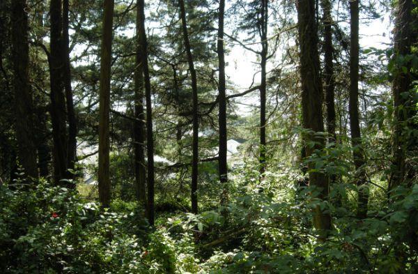 mt-davidson-forest 1