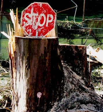 stop sign tree stump 1