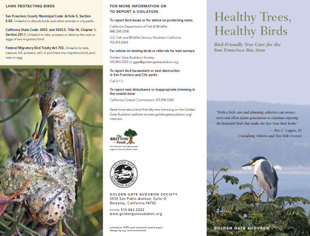GGAS Healthy Trees Healthy Birds brochure 1