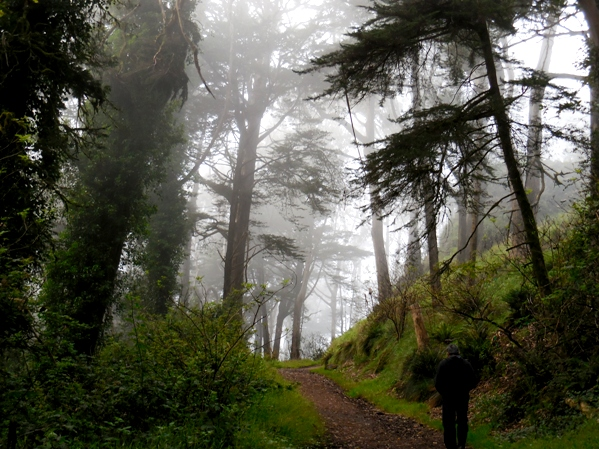 Fairytale forest on Mt Davidson