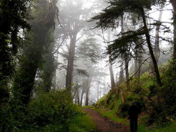 Fairytale forest on Mt Davidson