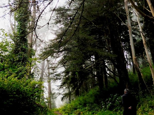 Mt Davidson forest Aug 2014