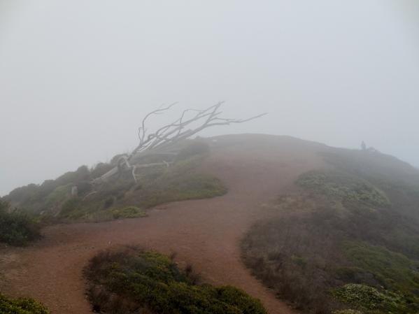 Murdered tree point with no vista