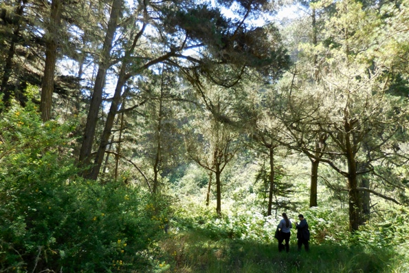 10 meadow in the woods in Sharp park archery range
