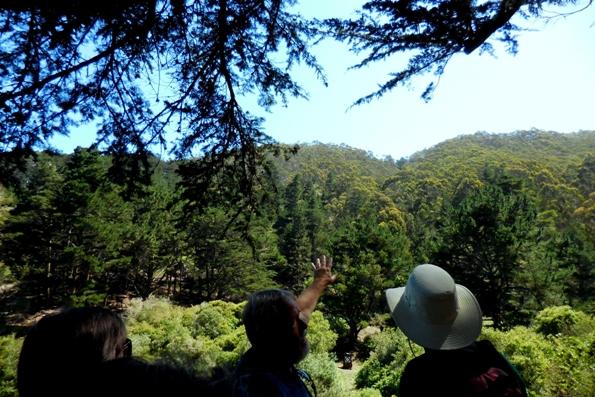 5a Trees on opposite hillside