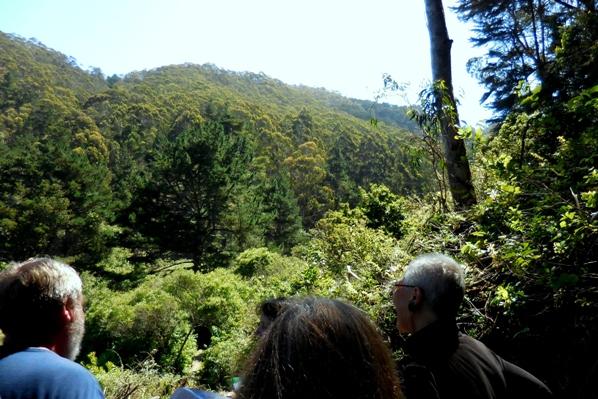 7 a forest on the hillside - sharp park