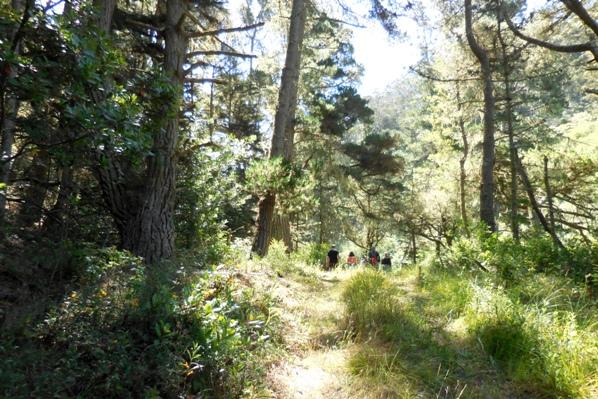 7 Idyllic forest in Sharp Park archery range
