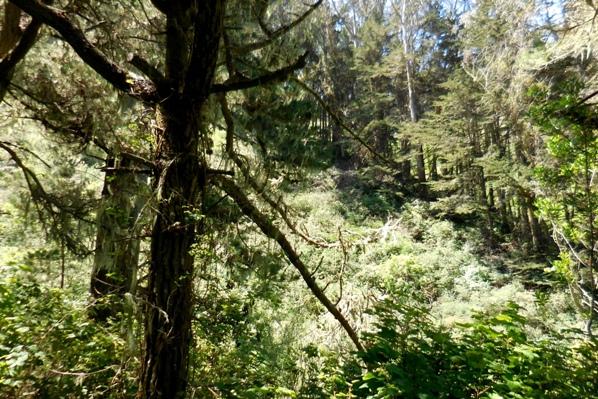 8 forest wildlife habitat  in sharp park archery range