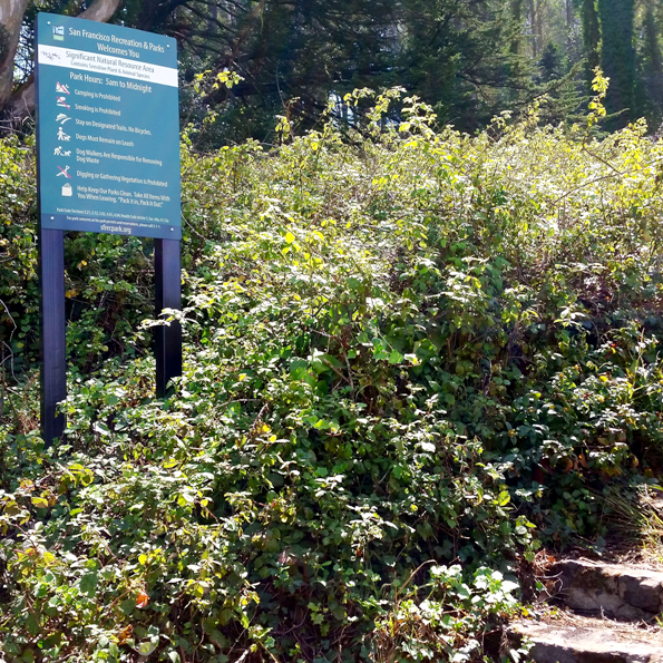 Mt Davidson 1 - entrance with NAP warning sign and blackberry bushes