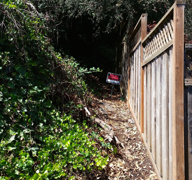 Mt Davidson 15 - ivy is green and not flammable