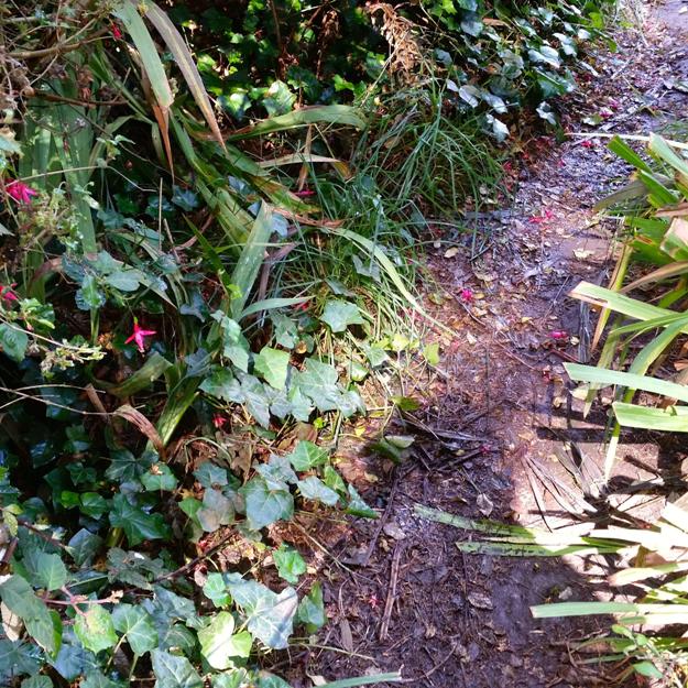 Mt Davidson 3 - greenery along pathway