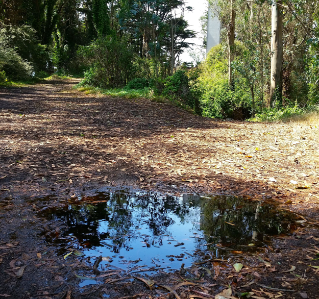 Mt Davidson 8 - standing water while the native plants are dry