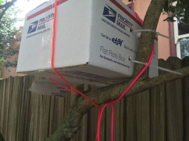 Box fastened into tree to rescue a hummingbird nest