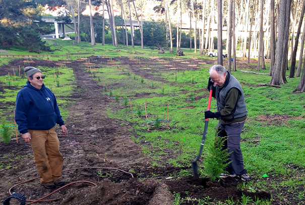 Peter Ehrlich (on the left) and Ron Proctor planting trees at the Presidio - Dec 2016